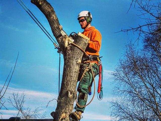 Приведут в порядок тысячу первоуральских деревьев