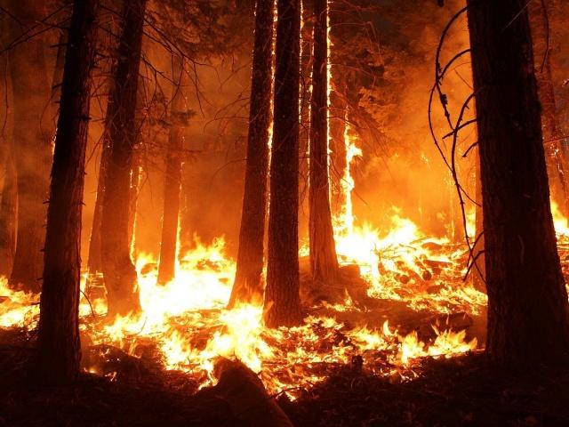 Площади действующих лесных пожаров в Свердловской области удалось сократить в два раза