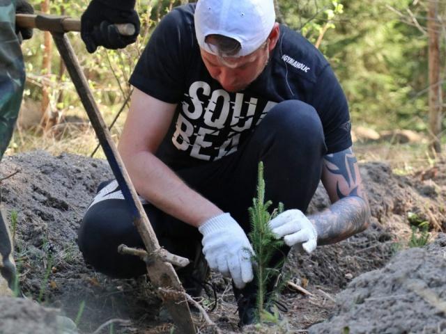 Восстановление леса в черте Первоуральска